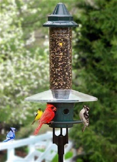 best squirrel proof wild bird feeders 2018 baffles caged