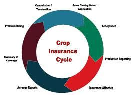 crop insurance important for ag industry washington ag crop insurance or agricultural insurance sector banking system bank management