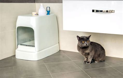 auto litter box catolet smart automatic litter box 187 gadget flow