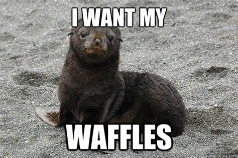 Waffles Meme - image gallery waffle meme