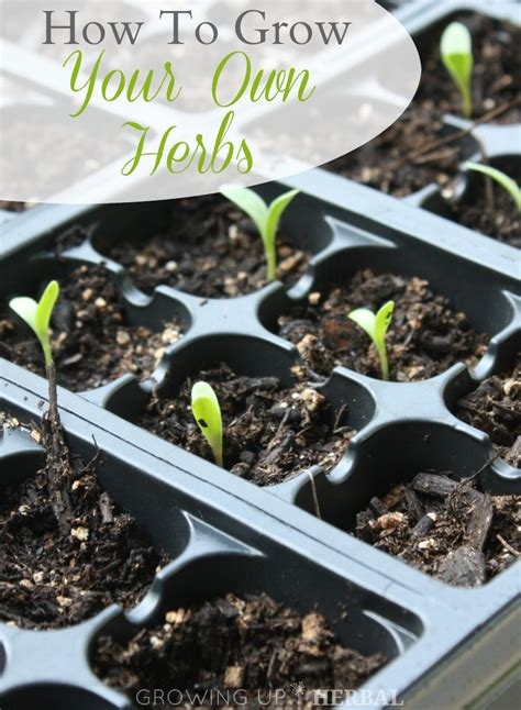 how to grow herbs how to grow herbs 28 images which herbs to grow