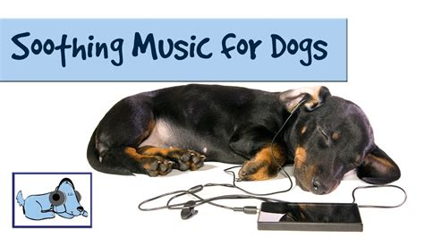 soothing sounds for puppies soothing sounds and for dogs improve separation anxiety in pets