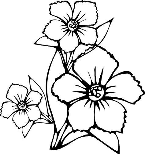 coloring pages jasmine flower jasmine flower coloring pages coloring home