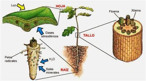 en defensa de las fitopatologia 1