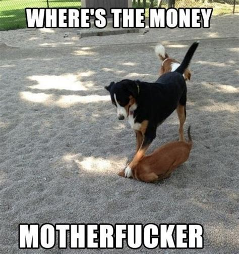 Funny Meme Collection - dog debt collector where s the money motherfucker