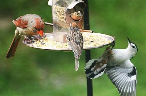 how to attract the birds with a bird feeder
