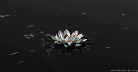 lotus flower black  white photography wallpaper desktop background