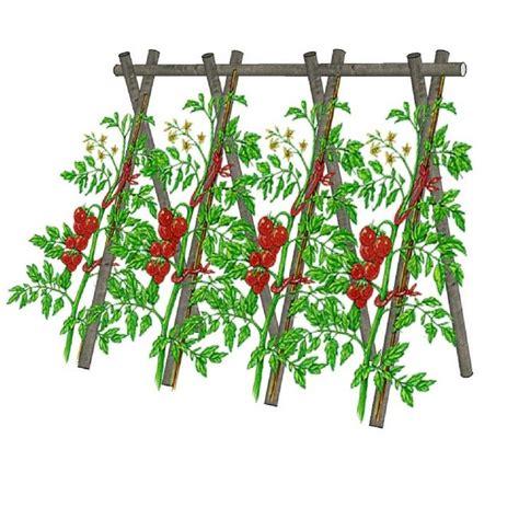 Tuteur à Tomate by Les 25 Meilleures Id 233 Es De La Cat 233 Gorie Tuteur Tomate Sur