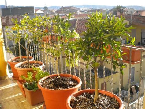 piante in terrazzo il frutteto in terrazzo frutteto coltivare frutti sul