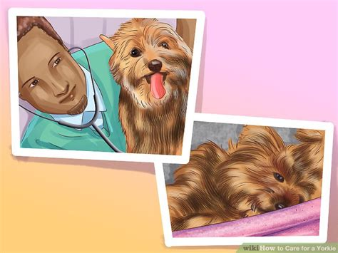 how to care for a yorkie how to care for a yorkie with pictures wikihow