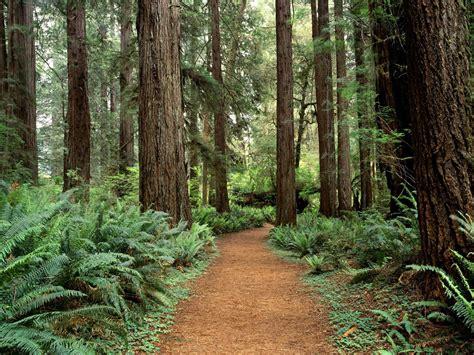 wallpaper pemandangan alam ukuran besar foto foto pemandangan hutan yang alami ukuran besar