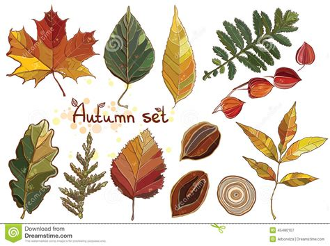 Decorative Nuts Vector Set With Autumn Set Leaves Nuts Tree Stock