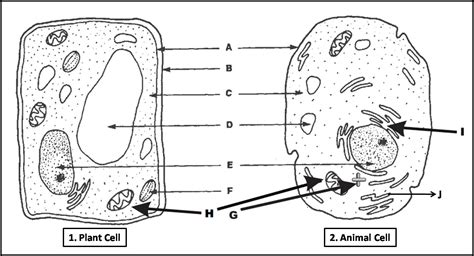 printable animal and plant cell quiz plant cell and animal cell diagram quiz biology multiple