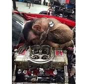 Working On An Engine  Funny Monkey Pictures