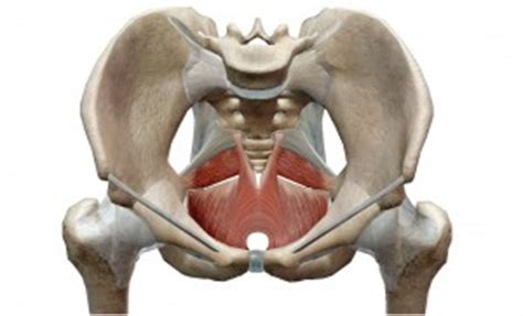pavimento pelvico femminile iperventilazione l importanza pavimento pelvico