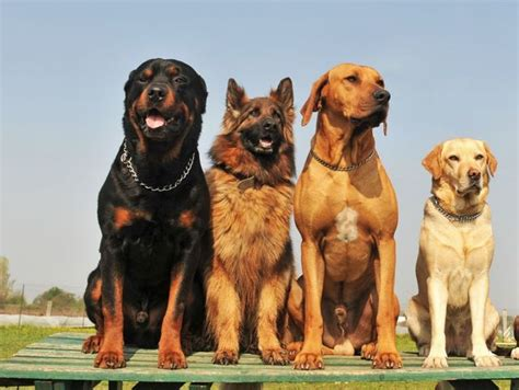buzzfeed dogs buzzfeed breed quiz breeds picture