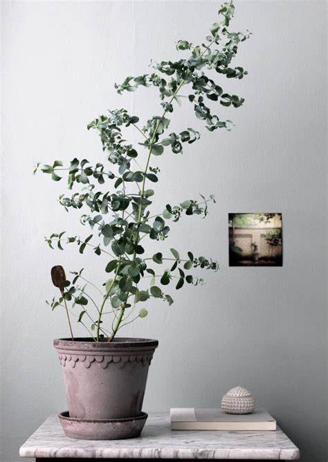 easy  care  nice smelling house plants indoor