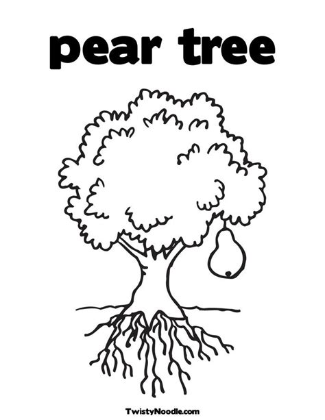 pin pecan tree colouring pages on pinterest