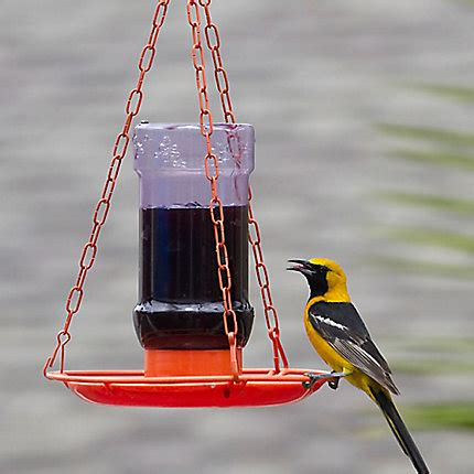 perky pet 174 oriole jelly bird feeder birdfeeders com