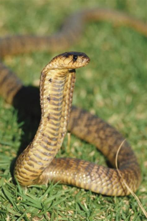 7 Most Poisonous Animals by A Top Eight List Of Africa S Most Dangerous Snakes