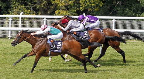 racehorse training - Bing images