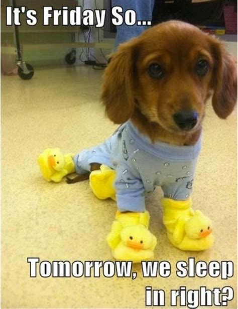 friday puppy it s friday humor