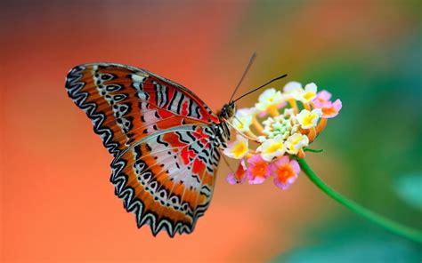 imagenes de mariposas reales bonitas im 193 genes espectaculares las mariposas m 193 s bellas