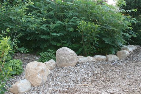 Rock Garden Definition More Rocks In The Landscape My Everchanging Garden