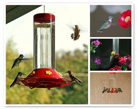homemade hummingbird nectar fairy garden pinterest