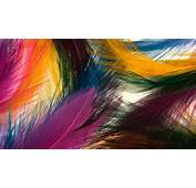Multicolored Feathers Android Wallpapers For Free
