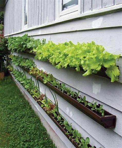pflanzen für wohnung dekorieren zaun idee