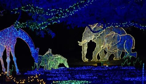 zoo lights parking how to avoid parking problems at zoo lights khou