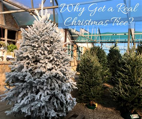 4 reasons to choose a real christmas tree fossil creek