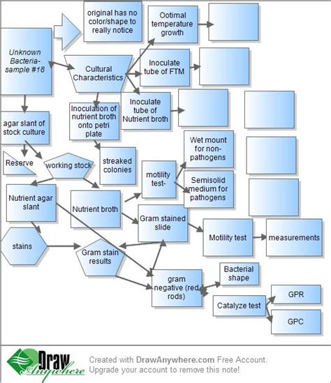 microbiology flowchart unknown bacteria 17 best images about microbiology on charts