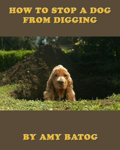 how to a to stop digging how to housebreak a puppy
