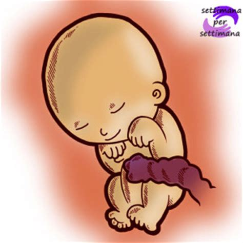 capezzoli interni il tuo bambino settimane di part 4