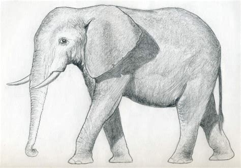 Drawing Elephant how to draw an elephant