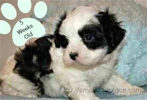 4 week puppy development puppy development stages step by step from birth to maturity