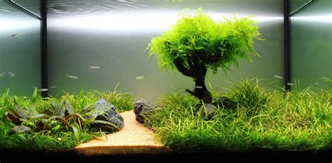 setting aquascape freshwater planted aquarium fragments of memories