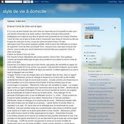 Nettoyer Urine Sur Tapis by Comment Nettoyer Urine De Chien Sur Tapis La R 233 Ponse Est