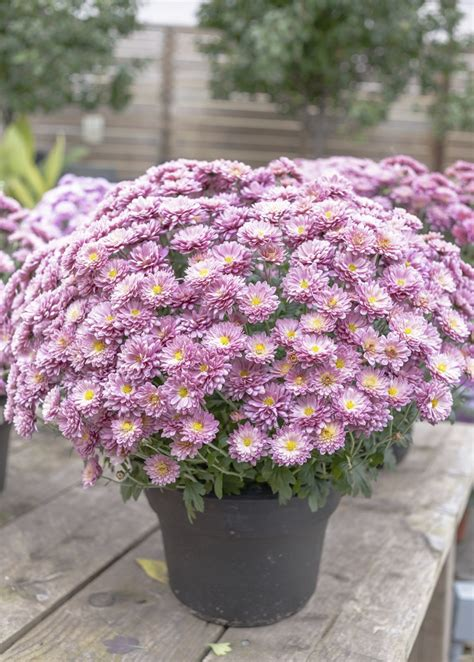 best flowers for small pots top 10 wonderful plants for small containers top inspired