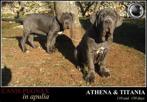Titania L by Athena E Titania L Infanzia