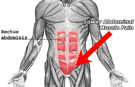 abdominal muscles diagram diagram of the abdomen muscles image collections how to