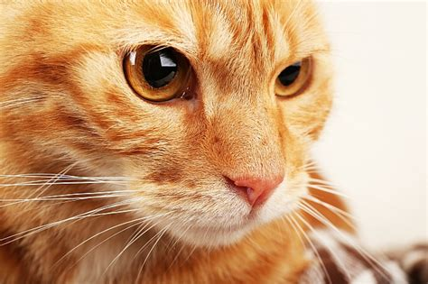 cat whiskers why do cats whiskers pet care facts