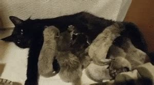 kittens born  fever coat  true colors
