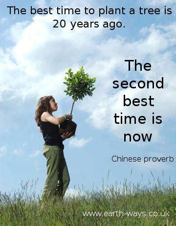best time to plant the best time to plant a tree coal country the