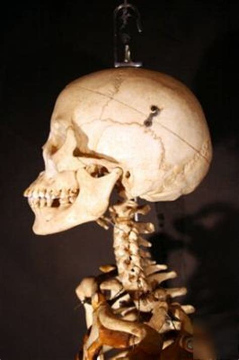 fully articulated real human skeleton
