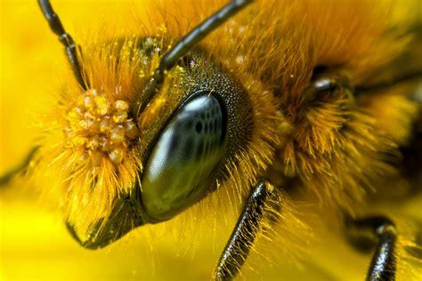 marla spivak winnovating bee health winnovating