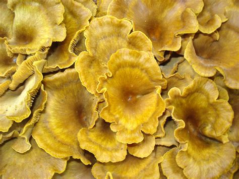 Types Of Garden Fungus - file fungus plant jpg wikimedia commons