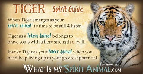 new year of tiger meaning new year animal tiger meaning 28 images the tiger
